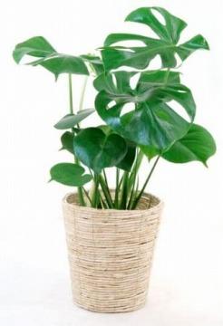 観葉植物でストレス軽減